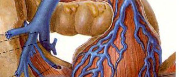 Insuffisance veineuse pelvienne de la femme – DPC