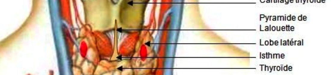 Pathologie cervicale extra vasculaire – REUNION ARMVOP
